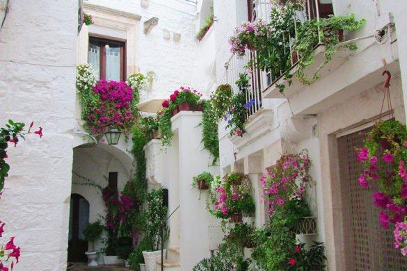 icolo-fiorito-Cisternino-Puglia