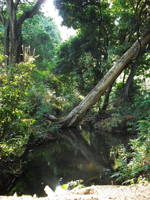 foresta-arba-minch-omo-ethiopia-etiopia