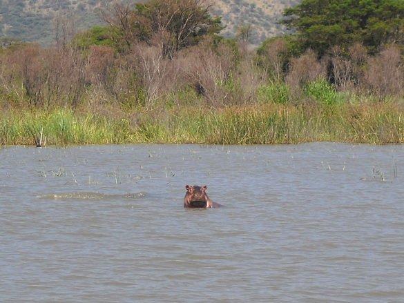 ippopotamo-lago-chamo-arba-minch-omo-ethiopia-etiopia