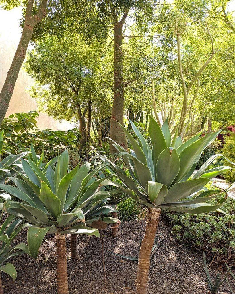 jardin secret-marrakech-marocco-africa